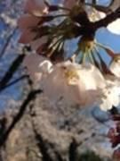 【東高円寺駅15秒ゲイツ&トウキョウキッズ】紅梅キャンペーン 2月末まで 3カ月先まで申込可能 全時間帯で100円引き