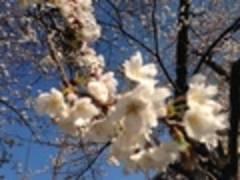 【青山一丁目徒歩45秒カーネギー&トウキョウキッズ】静かな環境で居心地が良い!