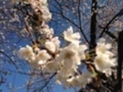 【新宿御苑前駅近ソロス&トウキョウキッズ】ほんとうに静かで明るい定員12名のスペース